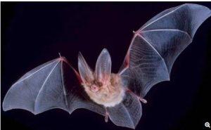 Bat guano fertilizer class