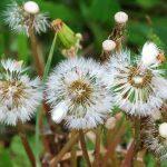 managing weeds class