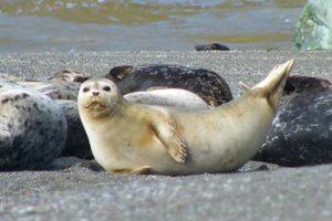 Marine Mammal seminar
