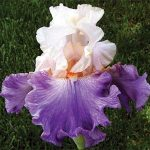 Iris workshop at Russian River Rose