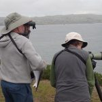Sea bird monitoring training