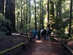 Armstrong Redwoods Park hike