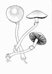 Nature illustration class