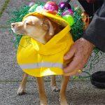 dog costume class