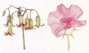 Drawing Botanical Springtime