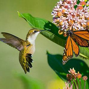 Gardening class pollinators