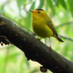 Bird at Sonoma Valley Regional Park