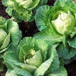 food gardening workshop